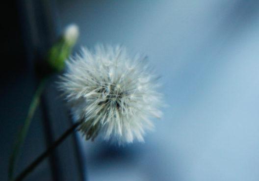 Effektiver Schutz vor Pollen (Bild: MeloAilin - shutterstock.com)