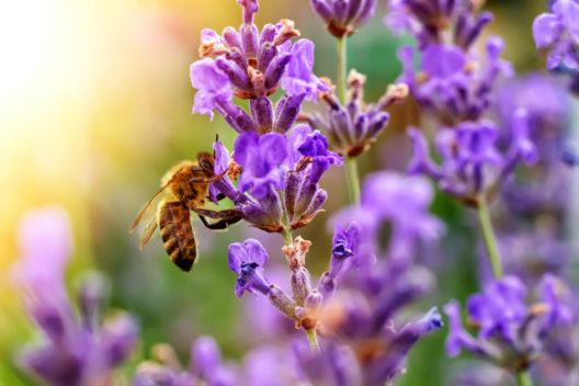 Eine Heimat für die Bienen im Garten (Bild: kosolovskyy - shutterstock.com)