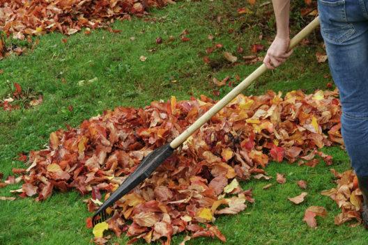 Herbstlaub sollte man nur auf dem Rasen sowie Wegen und Plätzen zusammen rechen.