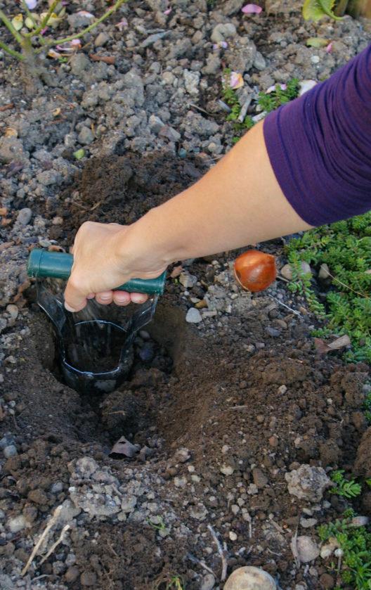 Zum ausheben des Pflanzlochs gibt es praktische Zwiebelstecher…