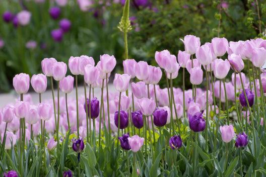 Was im Handumdrehen erledigt ist, sorgt im Frühling wochenlang für gute Laune.