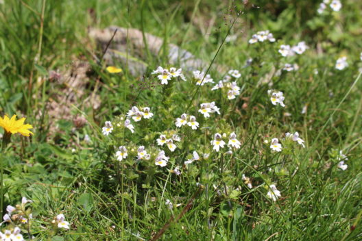 feature post image for Heilpflanzen im eigenen Garten
